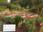 Raised Cedar Beds - Enjoy local homemade ingredients in our breakfasts including our own veggies