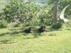Our Dog Freda, on the right, with Mac who came to play ball.