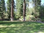 Pine Hollow Grass