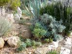 Mediterranean spicy herbs from our garden