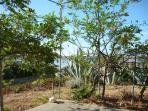 Jadro garden