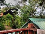 Roof top deck wildlife viewing