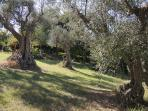 il parco della Casa