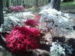 Gardens in the Spring
