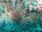 Mnemba Reef