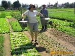 Tra Que vegetable Village,experience a day of living and working with the local farmers in this village. Only 10...