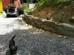 driveway, retaining wall and 'Rocky' the neighbors very friendly dog