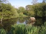 Duck pond - View from side window