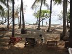 Relax area under shady palm trees with plenty of hammocks/beach chairs to do so!
