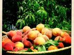 The Carriage House peach tree