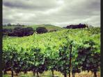 Russian River Valley wine country, Windsor