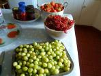 Summer fruits and jam to share from the house garden