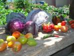 Viewpoint House - frutos biológicos