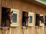 Meet the horses in the Indoor Barn