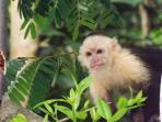 Enjoy monkeys as they pass through the yard.