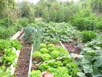 Orto --- section of vegetable garden