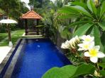 Frangipani / Plumeria tree drops sweet smelling flowers in the pool