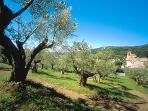 Villa Rosa - L'oliveto