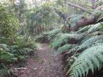 Enjoy a bush walk through our 60acre property.