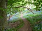 Coppett Hill in bluebell season