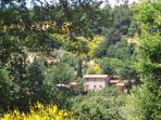 Agriturismo Le Maceie Tuscan Vacation Rental
