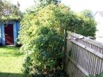 Here is our pretty shed x