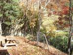 Backyard in the fall. Have a picnic.