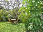 Private, spacious garden to relax under a huge pink Plumeria tree.