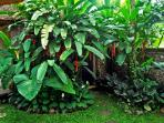 Private lush green garden inside the compund