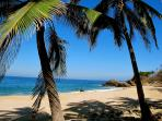 Palms on the big beach