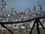 Seagulls in front of Villa Lactea