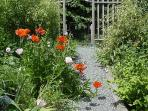 Path from suite Poppies in June