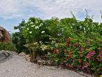 Wandelen in uw eigen tuin met tropische beplanting.