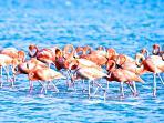 Flamingo's letterlijk om de hoek bij de zoutpannen van Jan Kok.