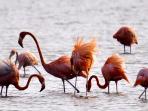 Flamingo's in de zoutpannen van Jan Kok, letterlijk om de hoek.