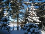 Winter Wonderland where you can x-country, downhill and try snow shoeing