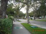 Easy Walk on a Tree Lined Street