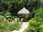 Tropical Back Yard