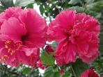Hibiscus Prize Winners