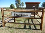 Book a trailride onsite Bison Stables, May to October