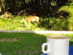 Coffee, watching the wild life