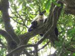 A white face monkey on the Palo Verde Tour