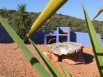 a nice, free  view surround  Quinta  da Arte with orange and carob plantages