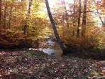 Fall colors streamside