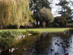 Ducks swimming at Beacon Hill Park