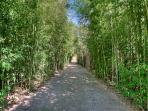 Long, Narrow Driveway lined with bamboo for privacy