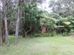 The backyard with giant tree ferns