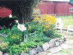 Rare Plants Garden Southwest of House
