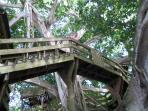 Tree house in Aguadilla Park