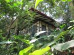 Casa Selva in its jungle setting